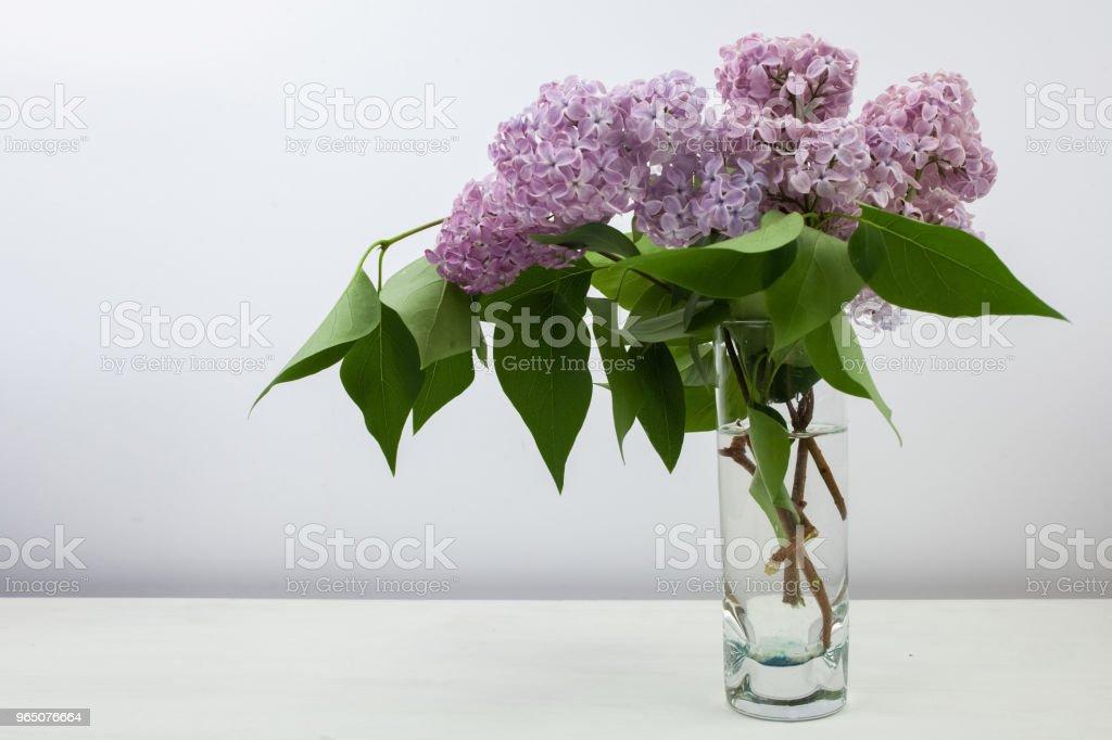 Lilac flowers in vase against white background zbiór zdjęć royalty-free