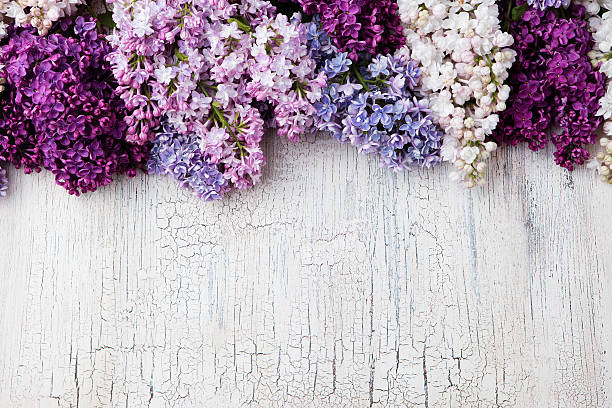 lilac flowers on crackling wooden background top view copy space - 수수꽃다리속 뉴스 사진 이미지