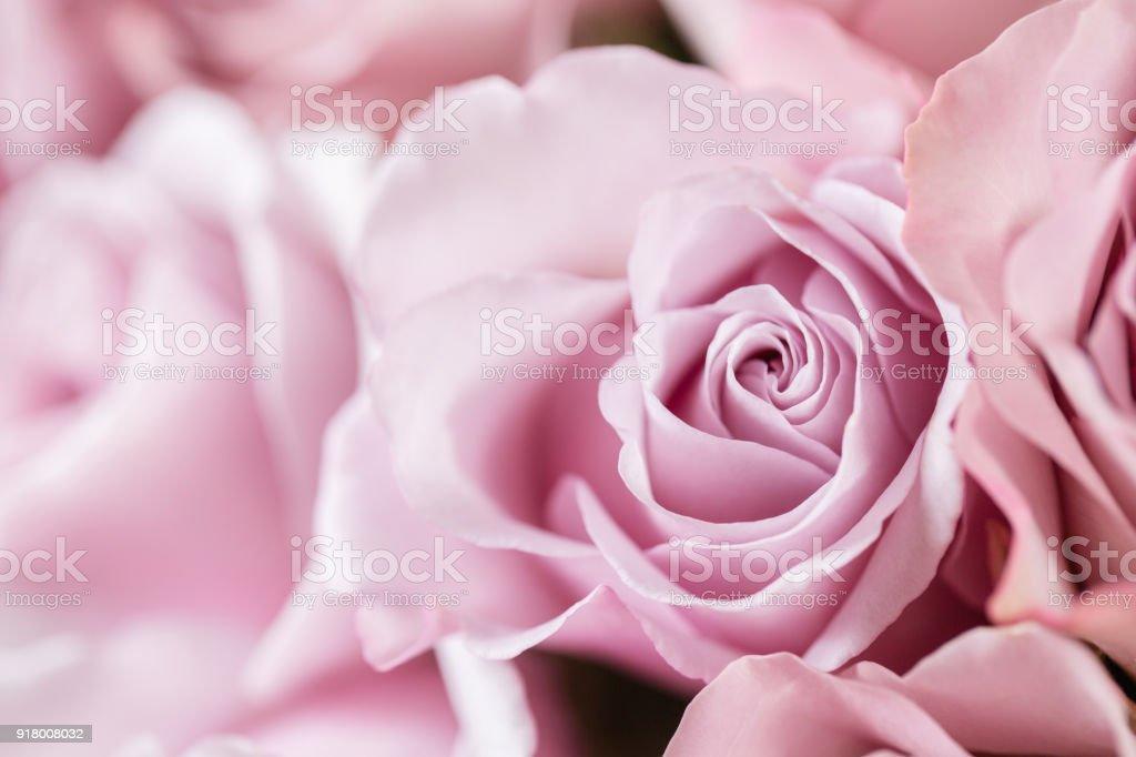 Lila Rose Garten. Bouquet Blumen Rosen in Glasvase. Shabby chic Wohnkultur. Morgentau - Vielfalt. Tapete – Foto