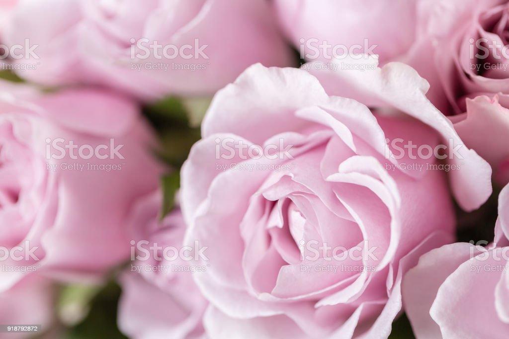 Photo libre de droit de Lila Rose De Jardin Bouquet De Fleurs De ...
