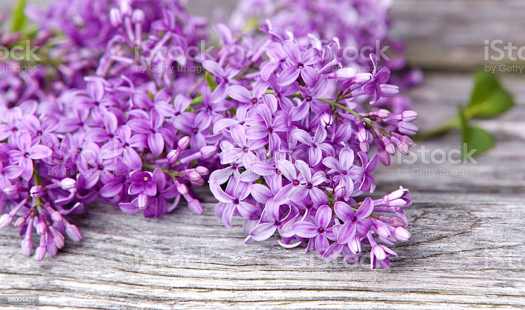 Lilac on Wood Background royalty free stockfoto