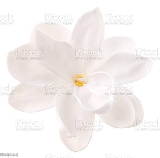 Lilac picture id175454889?b=1&k=6&m=175454889&s=612x612&h=xmdbh9u4ck3itimwgw5lgf 9mbsxbspfts35ahc2hqk=