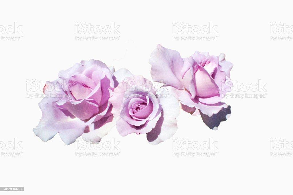 Lilas de roses - Photo