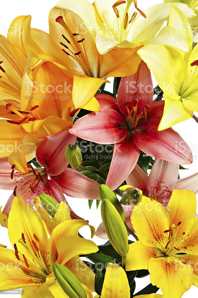 Lilies close-up stock photo