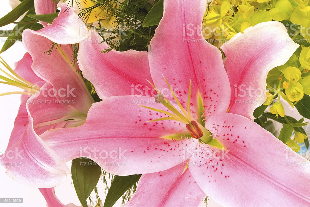 Lilies for Mom stock photo