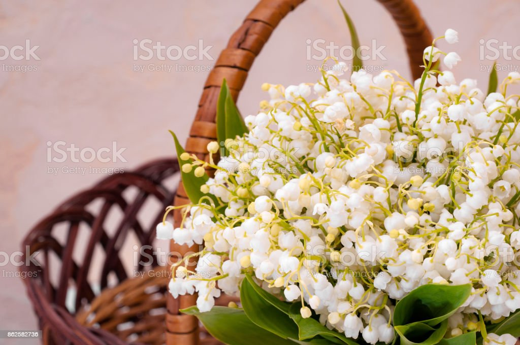 Lilies of the valley in the basket stock photo