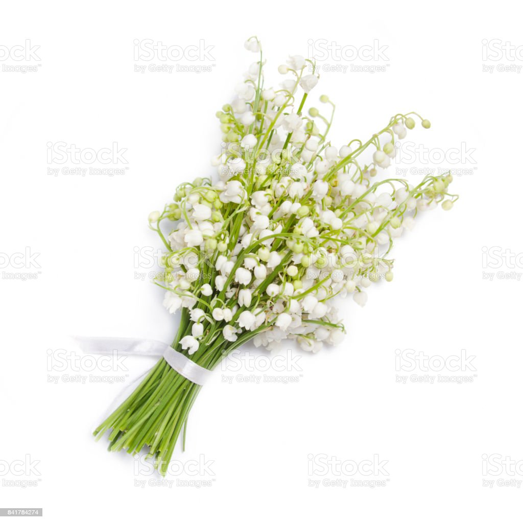 Lilies Of The Valley On White Background Stock Photo - Download Image Now -  iStock