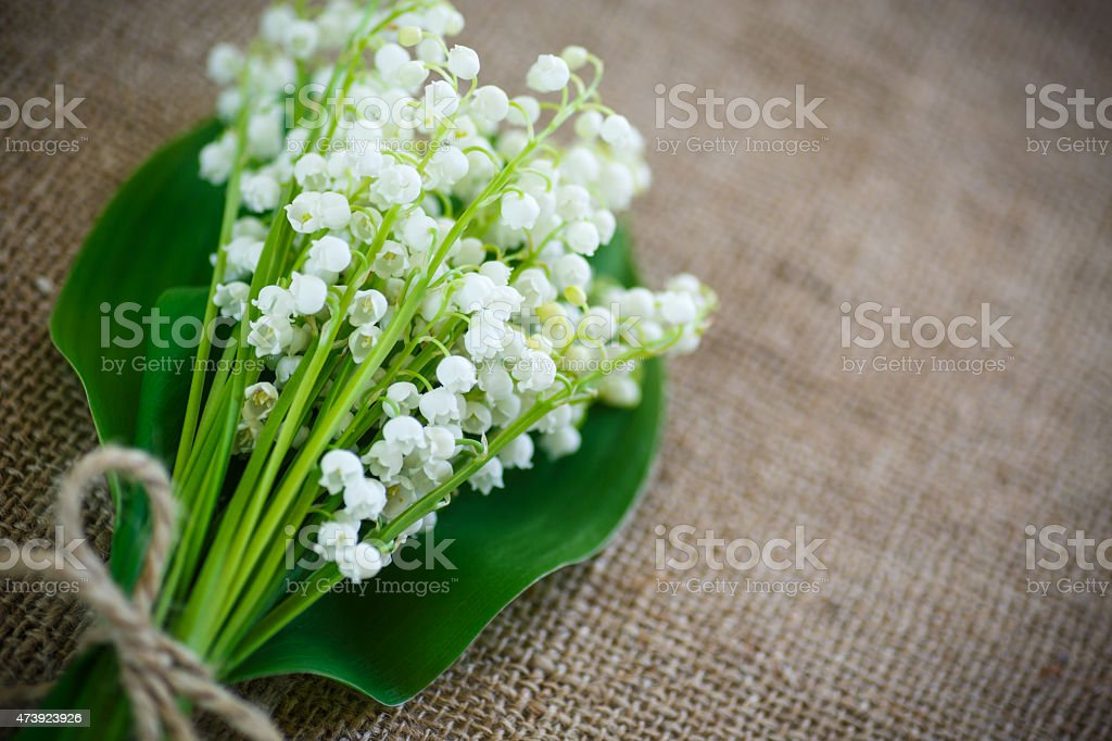 bouquet of lily of the valley flowering in the table of burlap