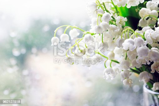 Bouquet of Lilies of the Valley isolated on dim background.