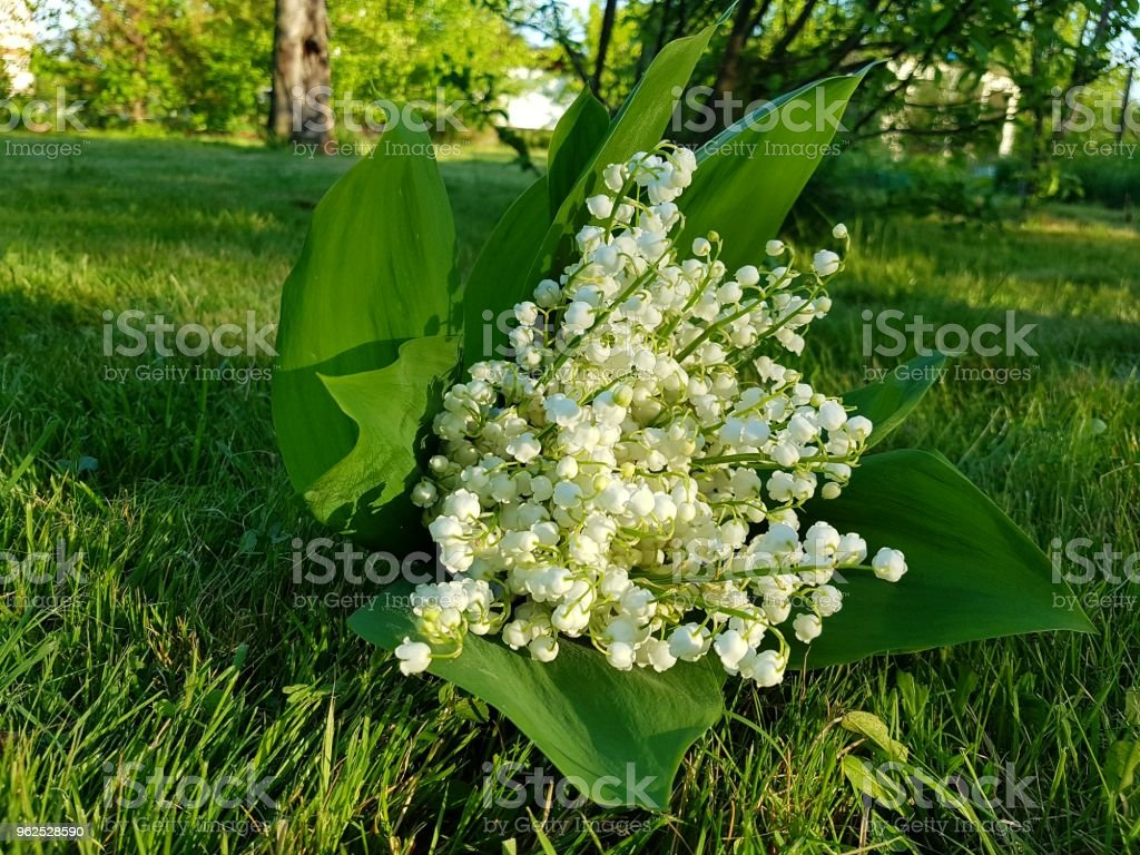 Ландыши Lilies Of The Valley Stock Photo - Download Image Now - iStock