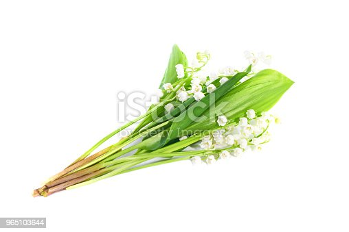 Lilies Of The Valley Stock Photo & More Pictures of Beauty