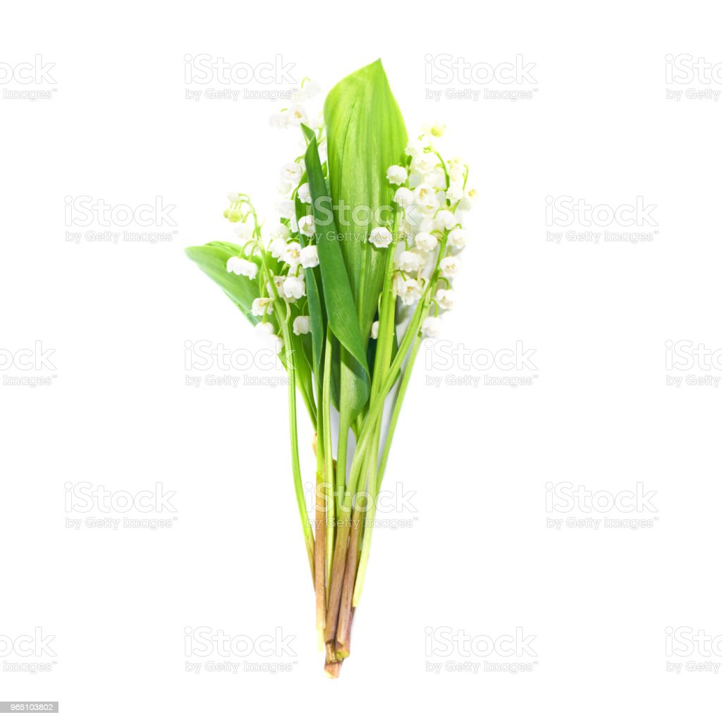 Lilies of the valley royalty-free stock photo