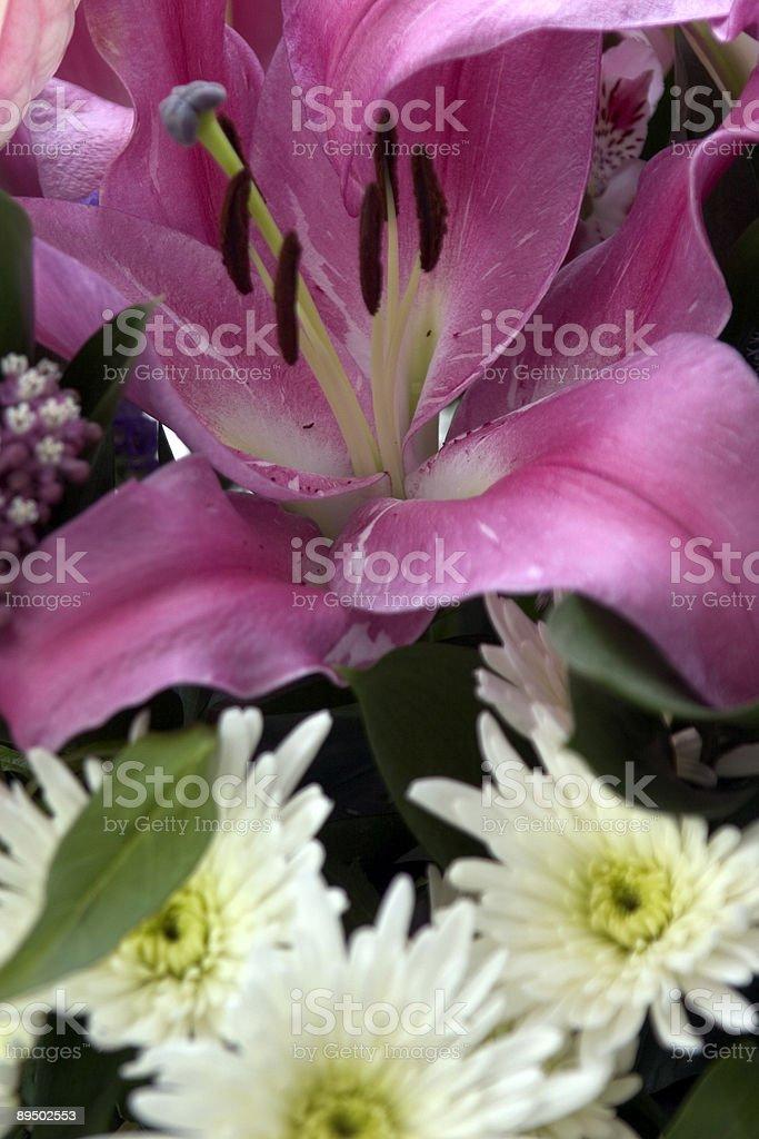Lilies foto de stock libre de derechos