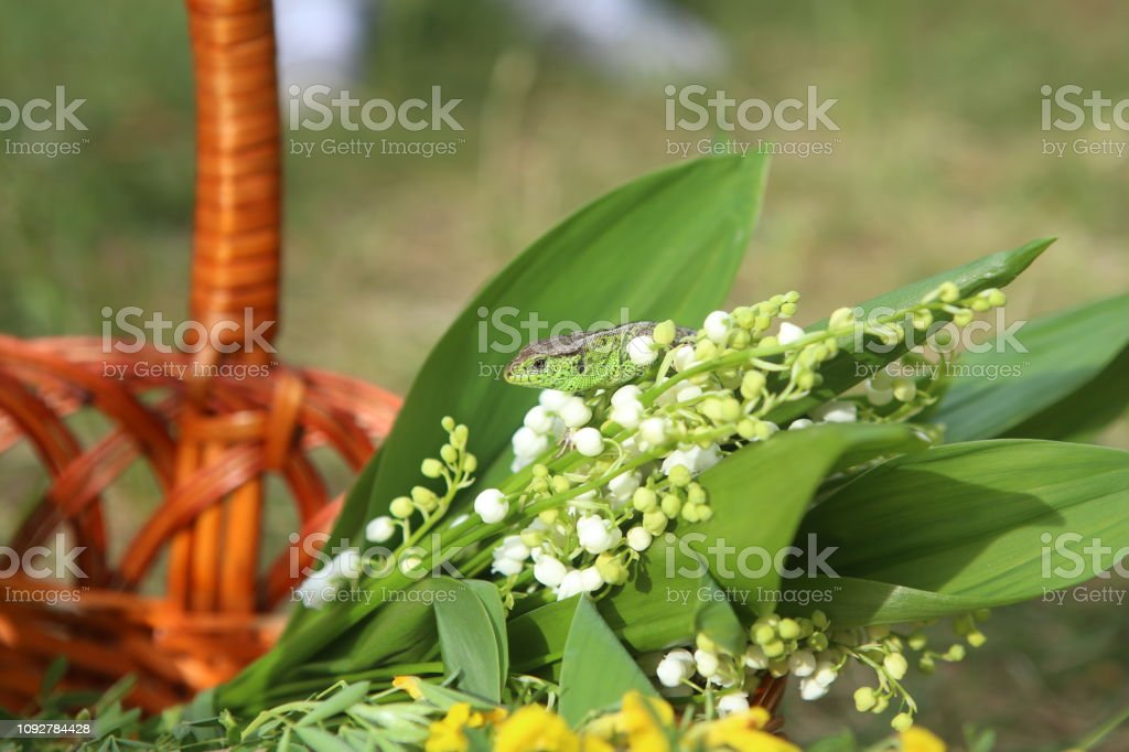 lilies of the valley in the woods in a clearing with a tree