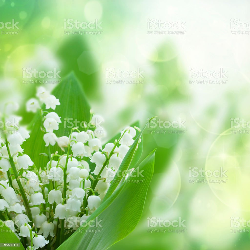 Lilly of the valley flowers close up stock photo more pictures of lilly of the valley flowers close up royalty free stock photo izmirmasajfo