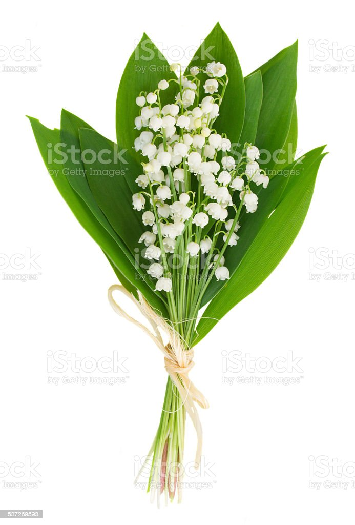 lilly of the valley posy stock photo