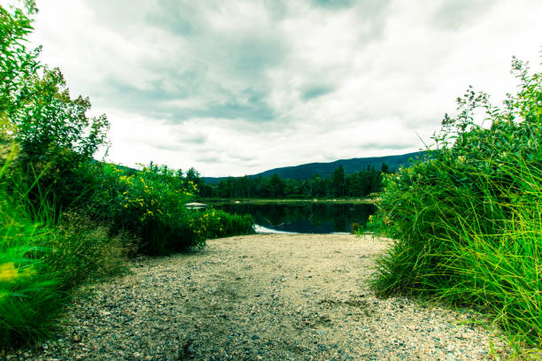 lilly pond of white mountain national park - loudon stock photos and pictures