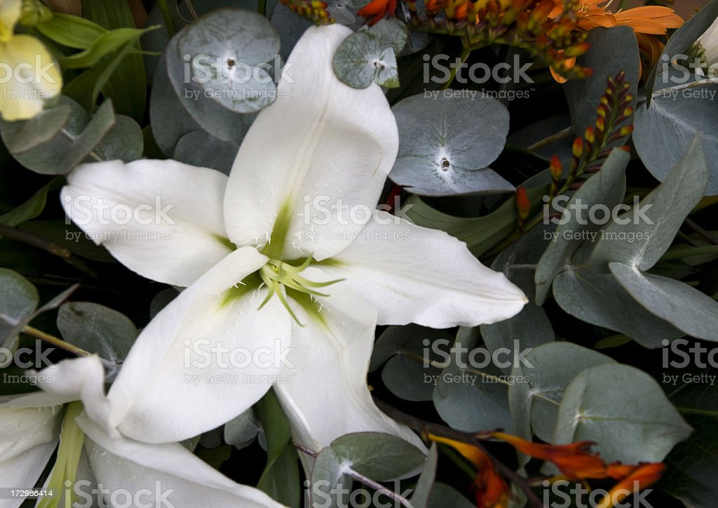 Lily and eucalyptus royalty-free stock photo