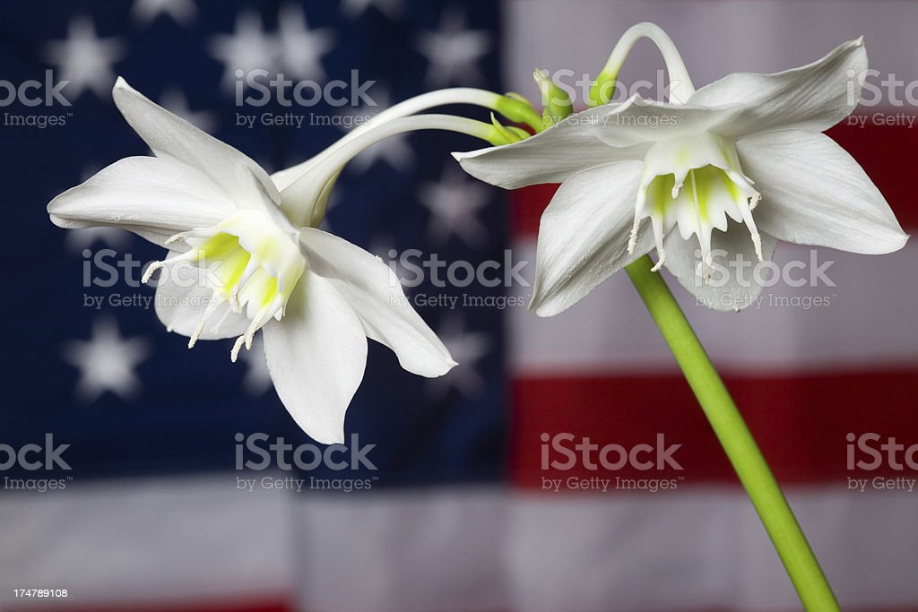 Lily and flag royalty-free stock photo