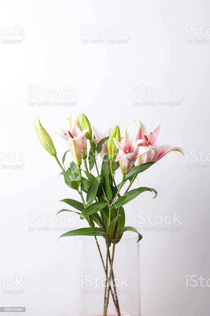 lily bouquet in glass vase studio shot stock photo