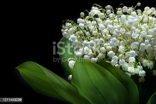 istock Lily bouquet on a black background close up. Wild flowers 1211443239