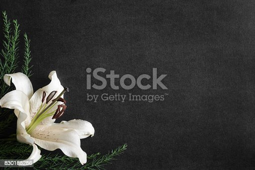 istock Lily flower on the dark background. Condolence card. Empty place for a text. 830188286