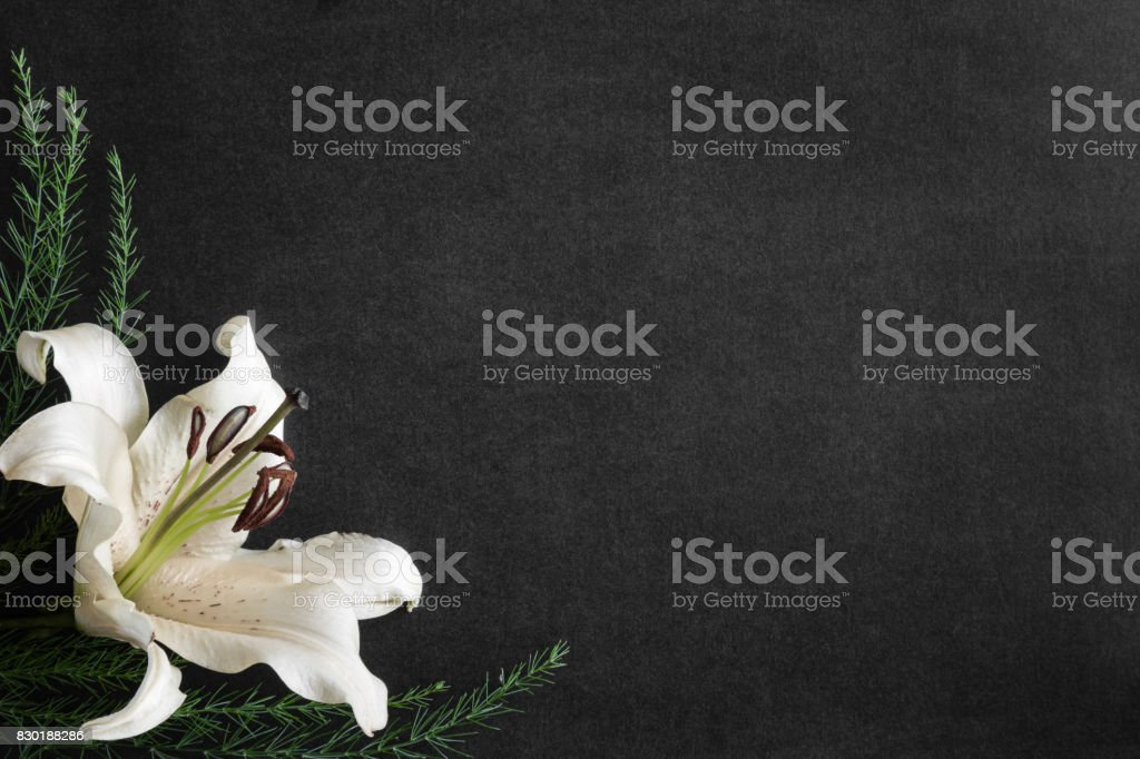Lily flower on the dark background. Condolence card. Empty place for a text. stock photo