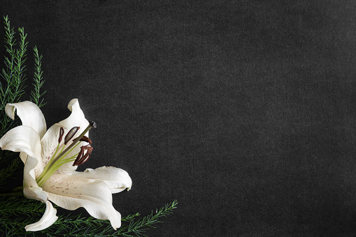 lily flower on the dark background condolence card empty