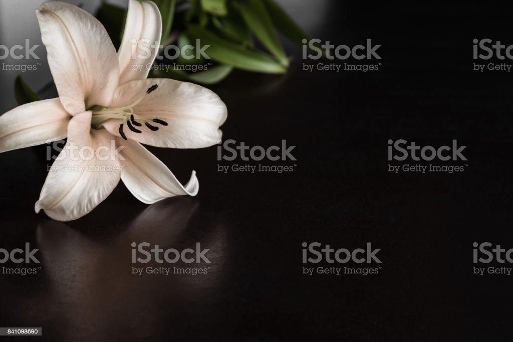 Lilie Blume auf dem dunklen Hintergrund. Kondolenz-Karte. Leeren Platz für einen Text. – Foto