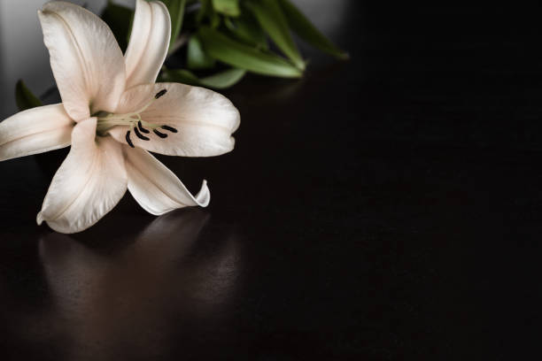 lily flower on the dark background. condolence card. empty place for a text. - monumento commemorativo foto e immagini stock