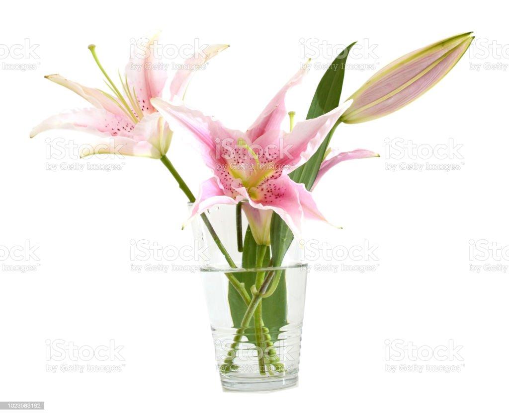 flores de lírio branco vaso isolado - foto de acervo
