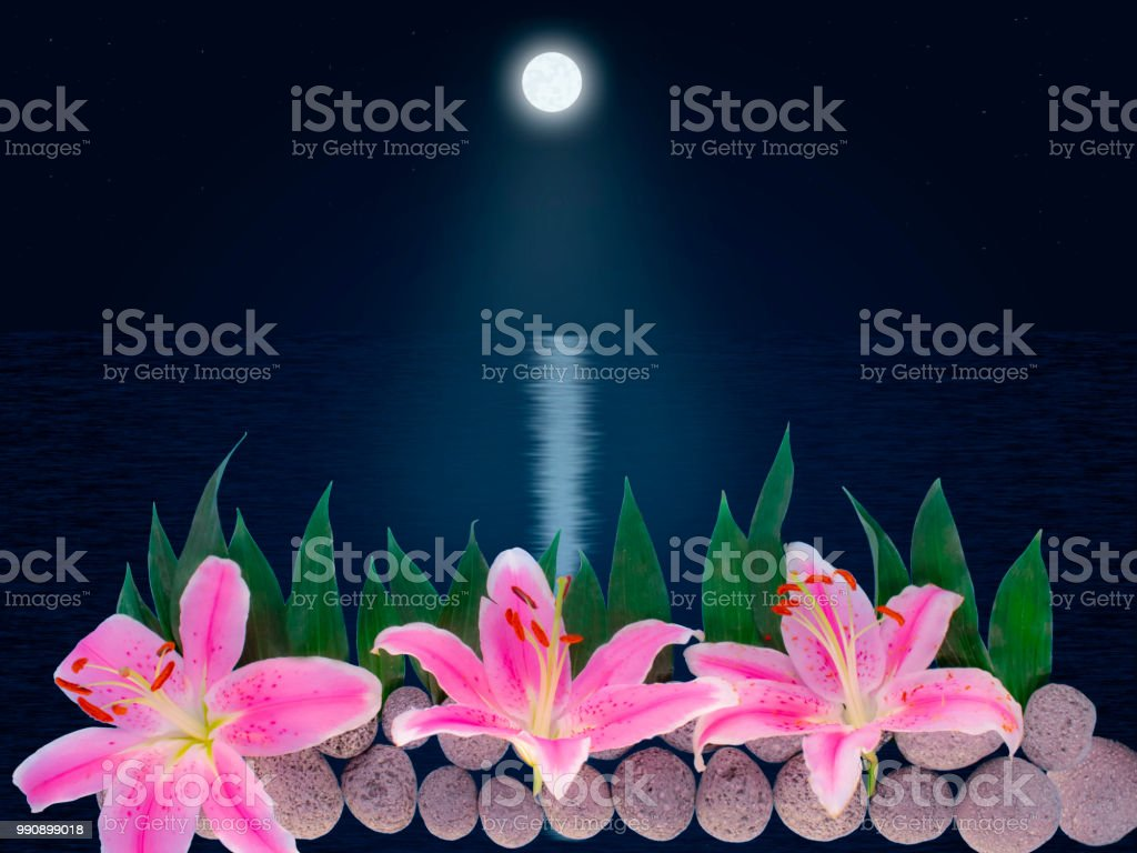 Lily Flowers On Stones Under The Rays Of Moonlight Stock Photo