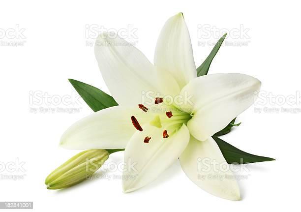 Lily isolated picture id182841001?b=1&k=6&m=182841001&s=612x612&h=mbtsjpla7qoubswr2gg1owfehmevkxadtbgvz8vu8j0=