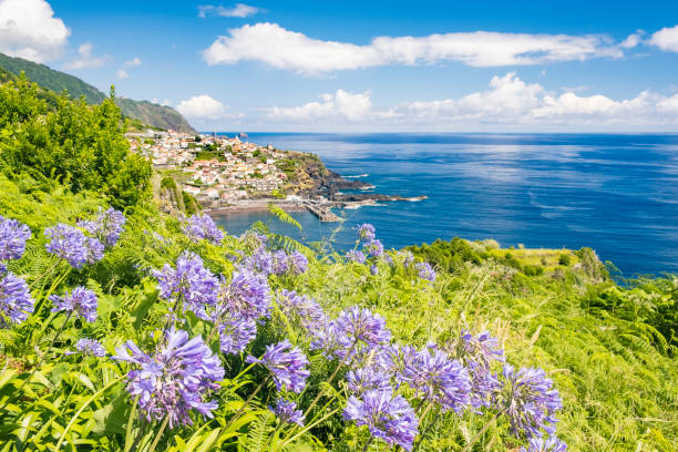 Lily of the Nile flowers in front of a view over Seixal coastal village on Madeira island stock photo