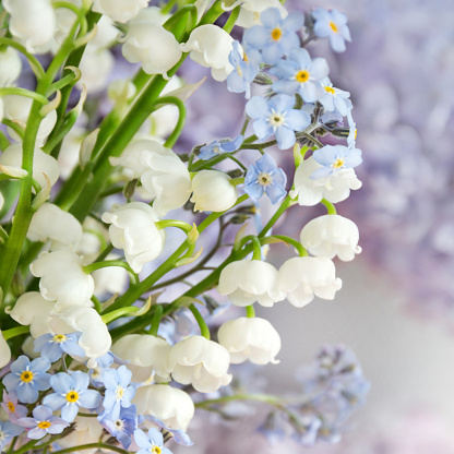Lily of the valley and forget-me-not flowers