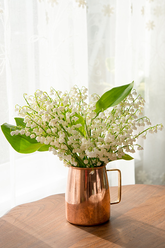 Lily of the Valley blooms in early June in Southern Canada