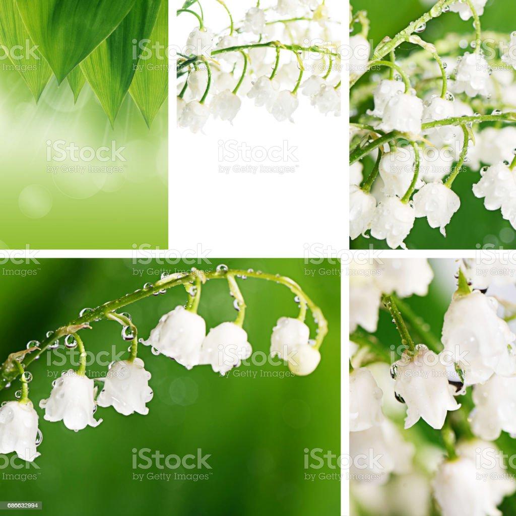 Lily of the Valley - Convallaria Majalis photo libre de droits