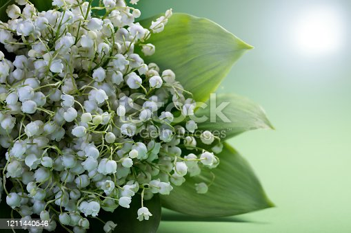 istock Lily of the valley flowers blossom on backdrop of the sun. 1211440546