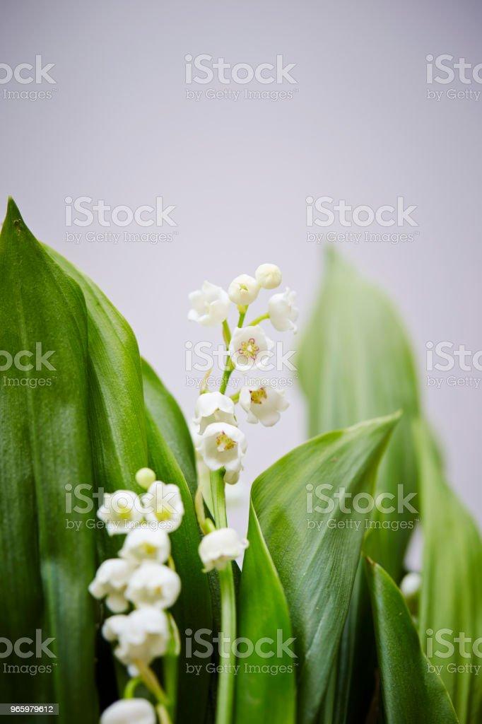 Liljekonvalj - Royaltyfri Blomkorg - Blomdel Bildbanksbilder