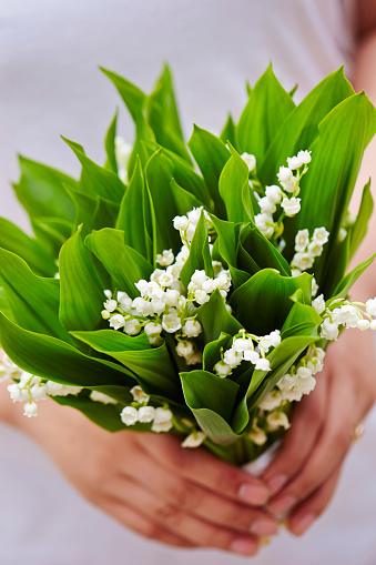 Lily Of The Valley Stockfoto en meer beelden van Bloem - Plant