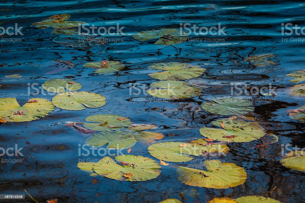 Lily Pad Reflections stock photo