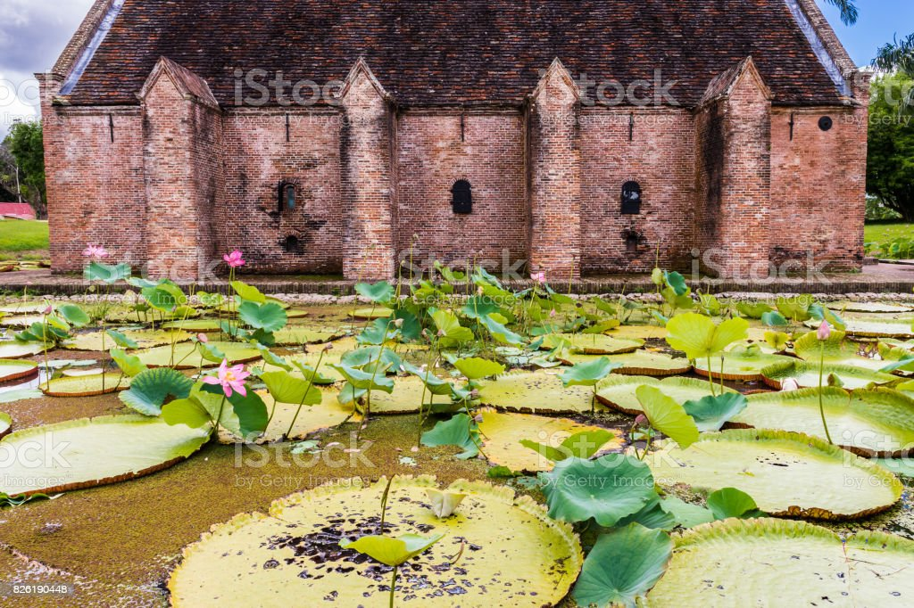 Lily Pad swamp in Nieuw Amsterdam, Suriname stock photo
