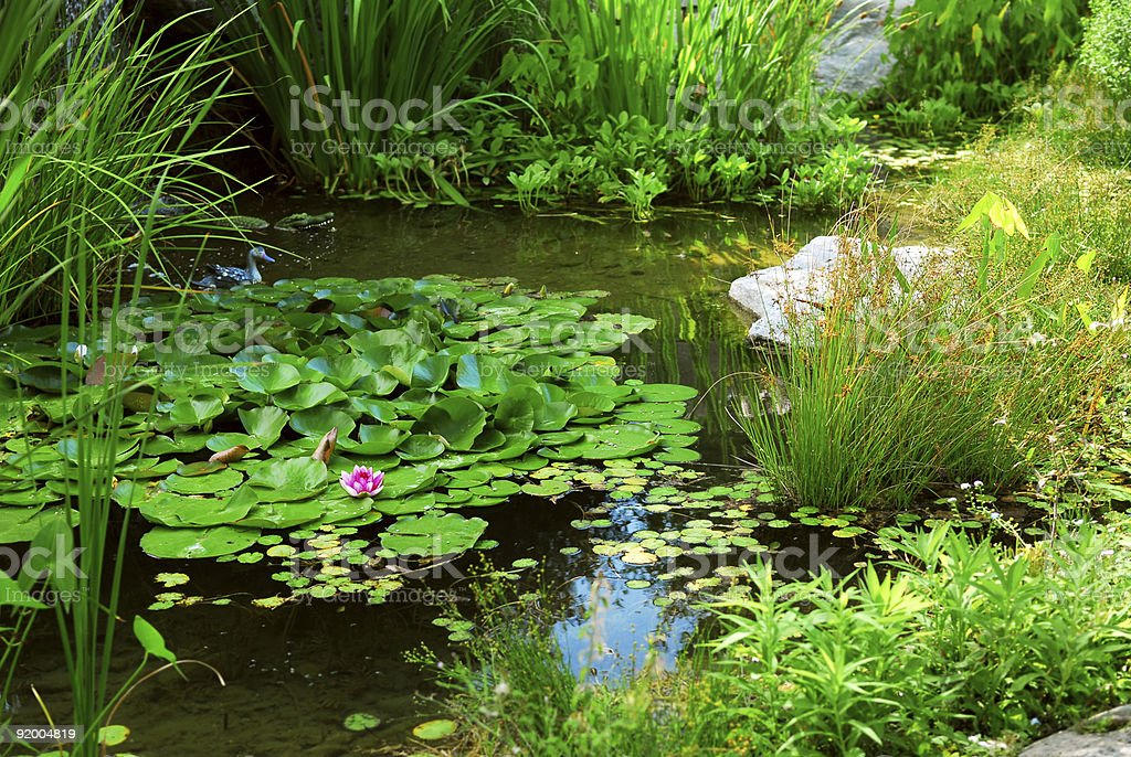 Lily pads and other greenery floating in a pond royalty-free stock photo