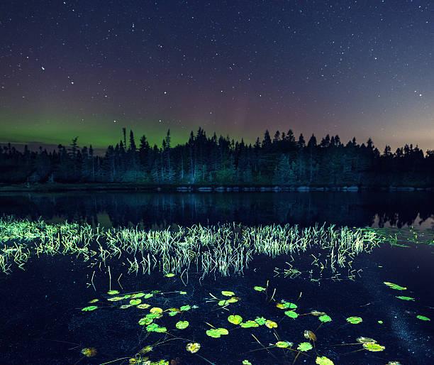 lily blocs au nord du lac - grande ourse photos et images de collection
