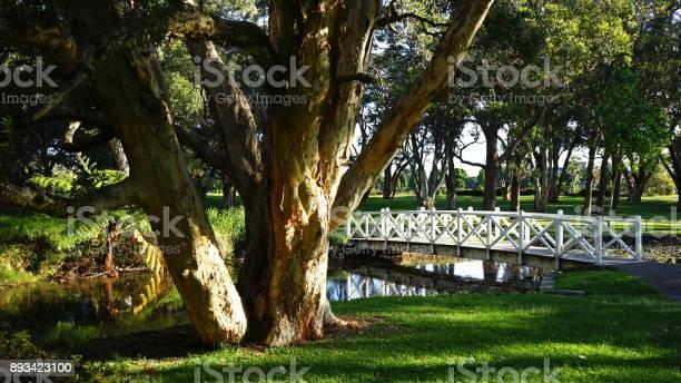 Photo of Lily Pond Bridge in Centennial Park, Sydney