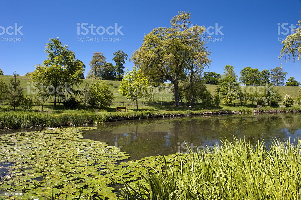 Lily Pond stock photo