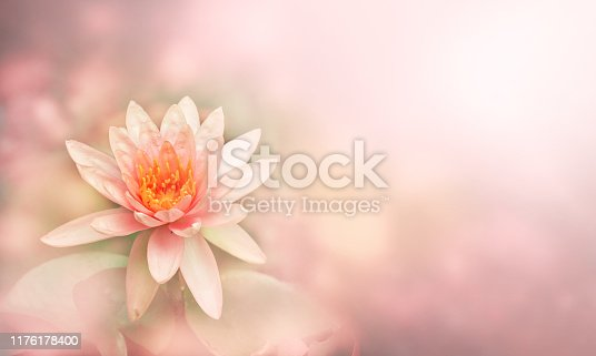 Lily water or Pink lotus flower on the water in light soft pastel color background for copy space, Lotus is symbolic of purity in Buddhist