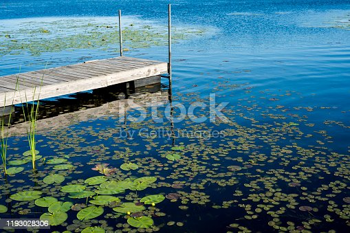 Fishing dock on a lake filled with lilypads on a summer day in northern Minnesota, Walker, MN, USA