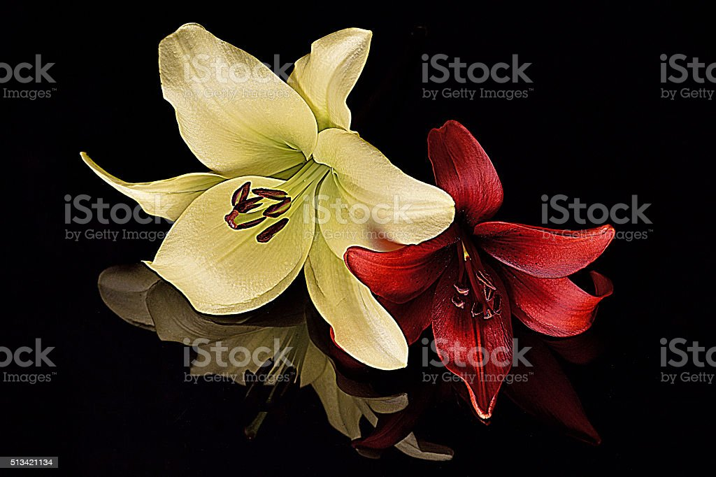 Lilys The seasonal Lily Flowers Flower Stock Photo