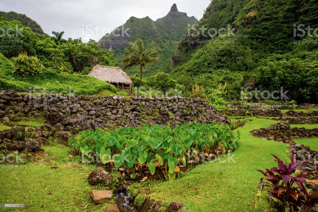 Limahuli Garden And Preserve Hawaii Stock Photo & More Pictures of ...
